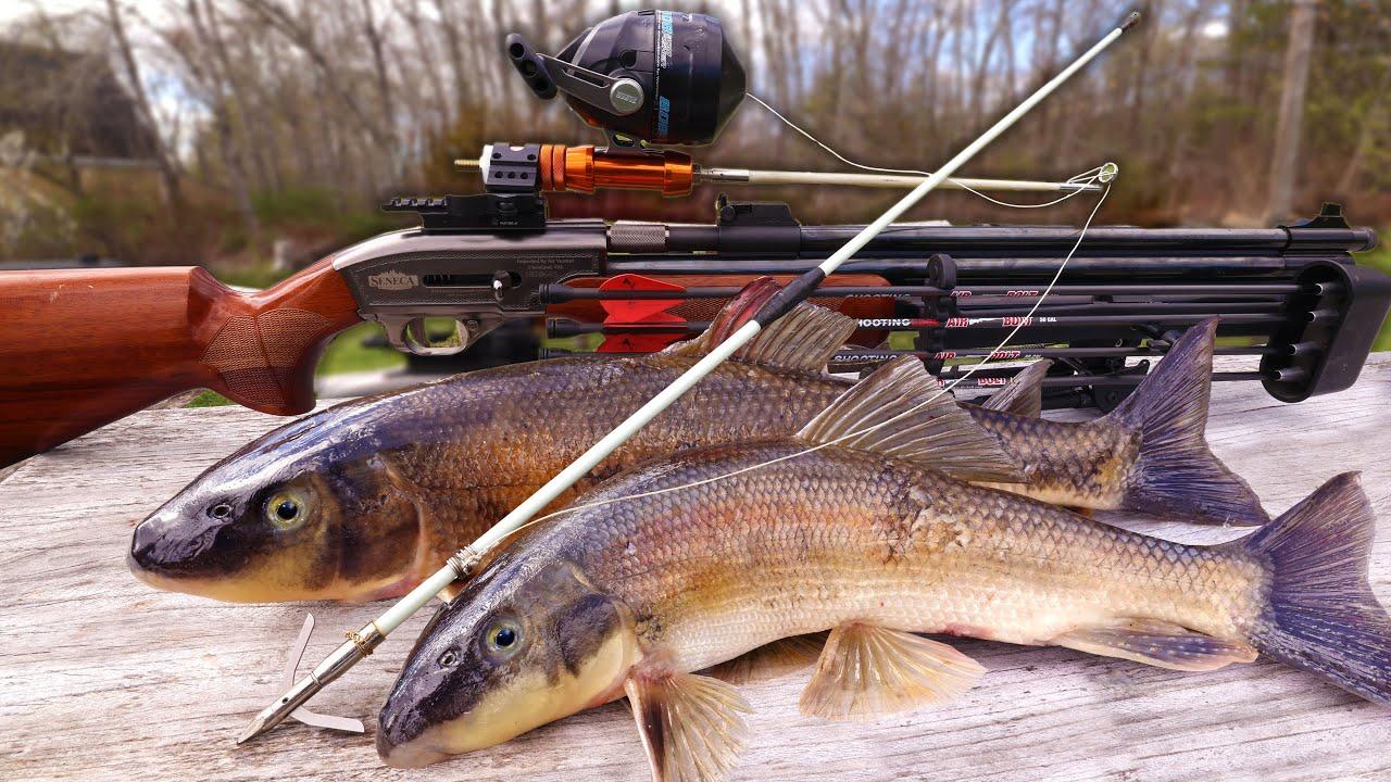 Air Rifle Fishing Reel HARPOON Mod   Sucker Fish Catch & Cook