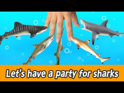 [EN] #88  Let's have a party for sharks, kids education, learn sharks name, Collecta figureㅣCoCosToy