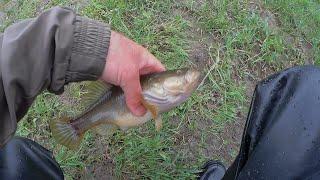 4 06 21 ловля окуня ротана и карася ультра легким спиннингом Crazy Fish Nano Zero Se