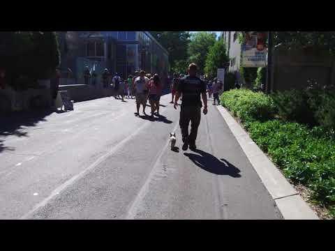 Best dog training in Washington state!