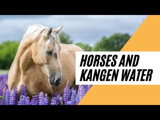 Horses and How much they love Kangen Water (Why Horses need to drink Hydrogen Ionised Water)