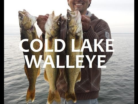How To Catch Cold Lake Walleye Fishing Alberta