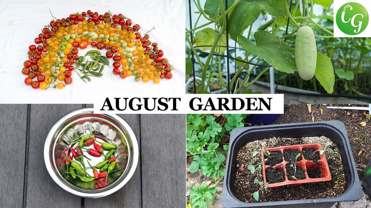 Garden in august in a garden - The California Garden In August Harvests Garden Preparation Month