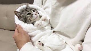 赤ちゃんみたいにお包みされてごきげんな猫がこちらです笑
