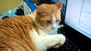 cat on computer mad as hell