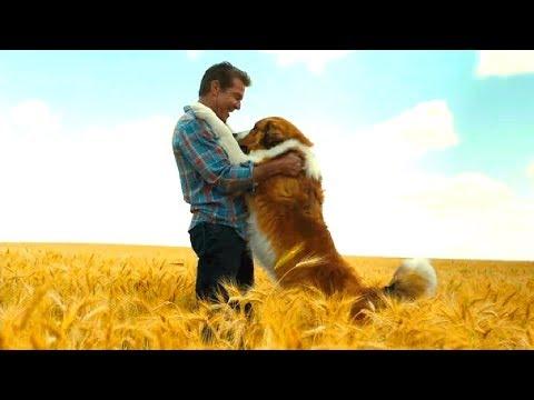СОБАЧЬЯ ЖИЗНЬ 2 - ФИЛЬМ 2019 - в кино с 29 августа - русский трейлер