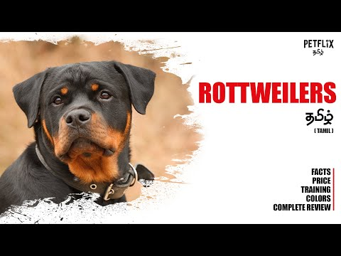 ROTTWEILERS  |  தமிழ்  |  Dangerous Dog  |  PETFLIX Tamil  |  Rottweiler as Pets  |  Dogs Review