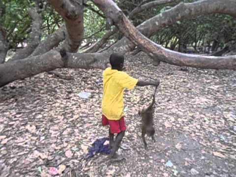 Guiné Bissau 2016 - Deu ruim pro macaco