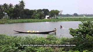 East Kolkata Wetlands: Ecologist's Perspective thumbnail