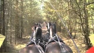 Sportief rijden bij Stalhouderij Het Zwarte Paard