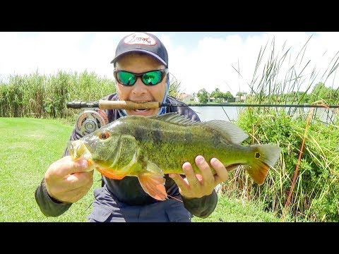 Fly Fishing For Peacock Bass In South Florida - Video # 175