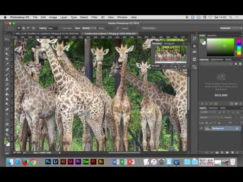 Adobe Photoshop and Dreamweaver - Website London Zoo