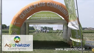 Syngenta in campo 2017, al via il CerealPlus Tour - Community edition