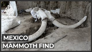 A mammoth discovery: Giant remains found near Mexico City