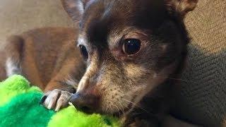 アメリカ・ケンタッキー州に住むケリーさんは、ジャクソンという犬を飼...