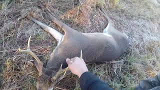 DEER HUNTING WITH DOGS 2017!! SEASON 3 EP 2 TWO BIG BUCKS DOWN!!!