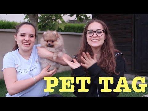 PET TAG + giveaway