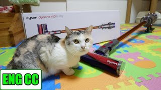 Unbelievable result of cleaning the cat room with Dyson V10...【Eng CC】