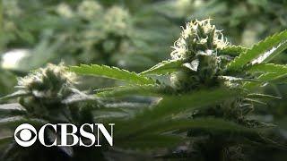 impact-of-marijuana-industry-5-years-after-legalization-in-colorado