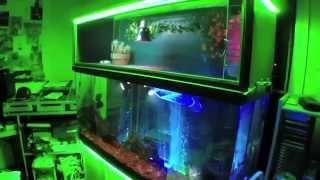 Turtle Topper Above 100 Gallon Aquarium