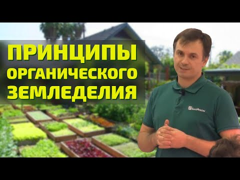 Вопрос: Органическое земледелие какие недостатки и достоинства метода?