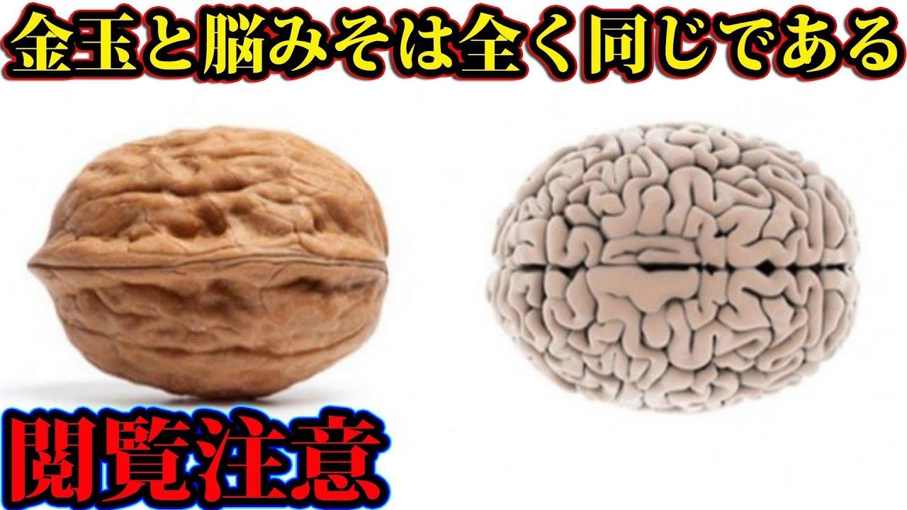 金玉と脳みそは全く同じである