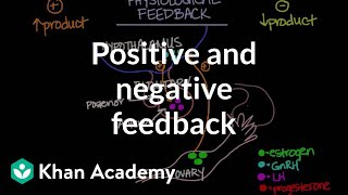 Physiological Concept of Positive and Negative Feedback