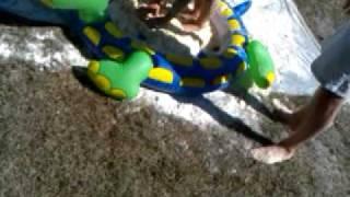 Turtle Pie Thumbnail