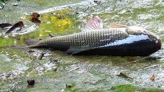 Best Fishing Video (Part-38)