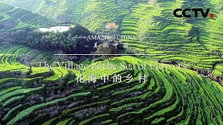 《美丽中国》花海中的乡村 Amazing China-The Village in the Sea of Flowers   CCTV纪录 - YouTube