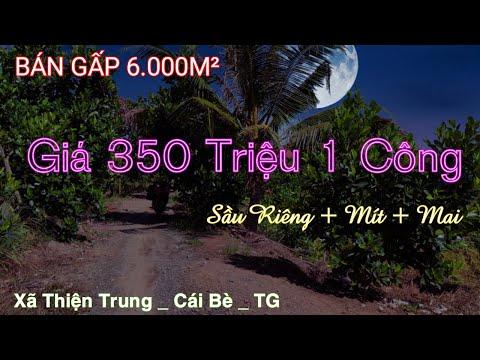 Cu Đất 🔴 Bán Gấp 6000 m² - Trồng Sầu Riêng - Mít - Mai Vàng - Giá Rẻ thuộc Cái Bè - Tiền Giang