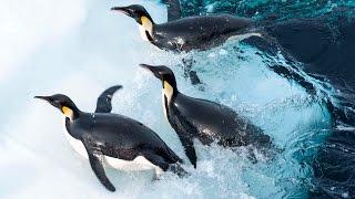 Putování tučňáků: Volání oceánu – Trailer CZ 4K