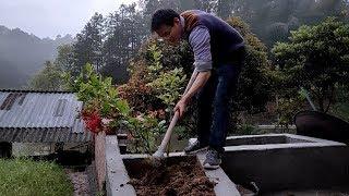 妈妈在家做了一个花坛,老公给秋子种下了爱情之花,丫头感动了