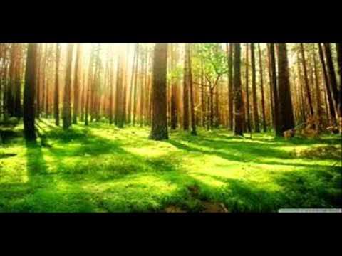 Peaceful by Kenny Rankin w/lyrics