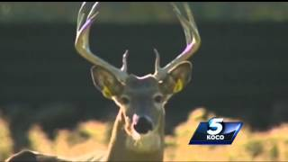 Deer population on the rise in Oklahoma
