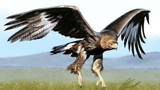 Рисуем птицу - Орёл(Беркут)/Eagle(Aquila chrysaetos)(How to draw an eagle(Aquila chrysaetos) Как нарисовать птицу - орёл(беркут), 2014-05-12T21:22:22.000Z)
