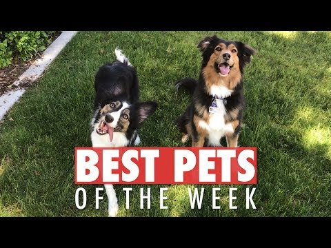 Best Pets of the Week | May 2018 Week 3