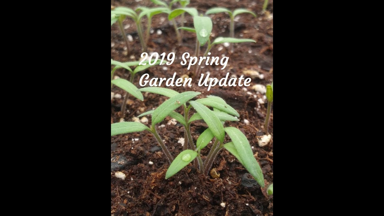 2019 Spring Garden Update and Seeds Started in Greenhouse #1