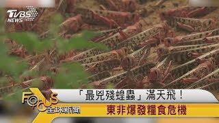 FOCUS/「最兇殘蝗蟲」滿天飛! 東非爆發糧食危機