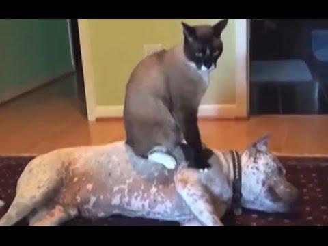 Dog Sitting On Cats Huffington Post