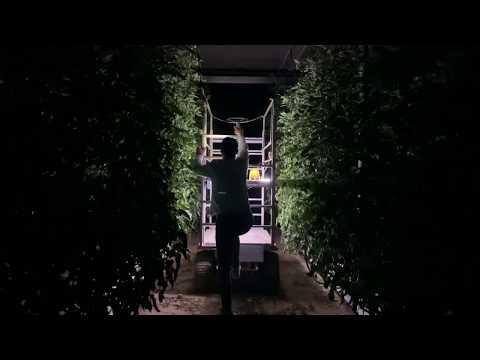 Andamio Eléctrico Invernadero video