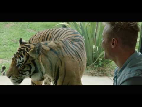 Jamala Wildlife Lodge - Canberra 15 sec TV ad 2017 - Tigers