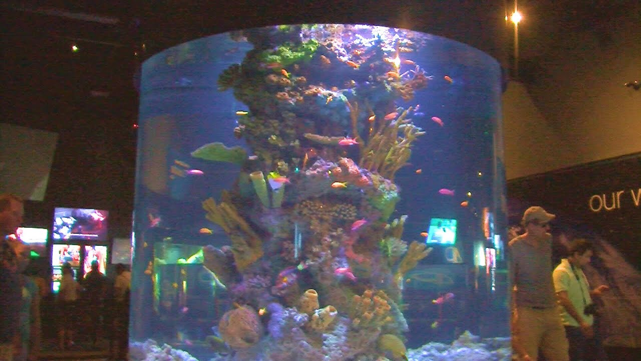 Cylindrical reef fish tank youtube for Cylindrical fish tank