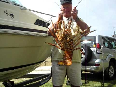 Huge Crayfish Caught In South Australia Youtube