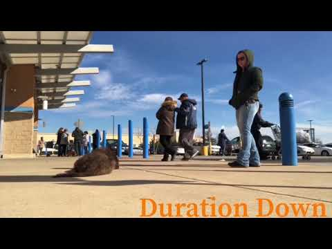 10 Month Old Labradoodle, Baloo | Labradoodle Electronic Collar Training | Off Leash K9