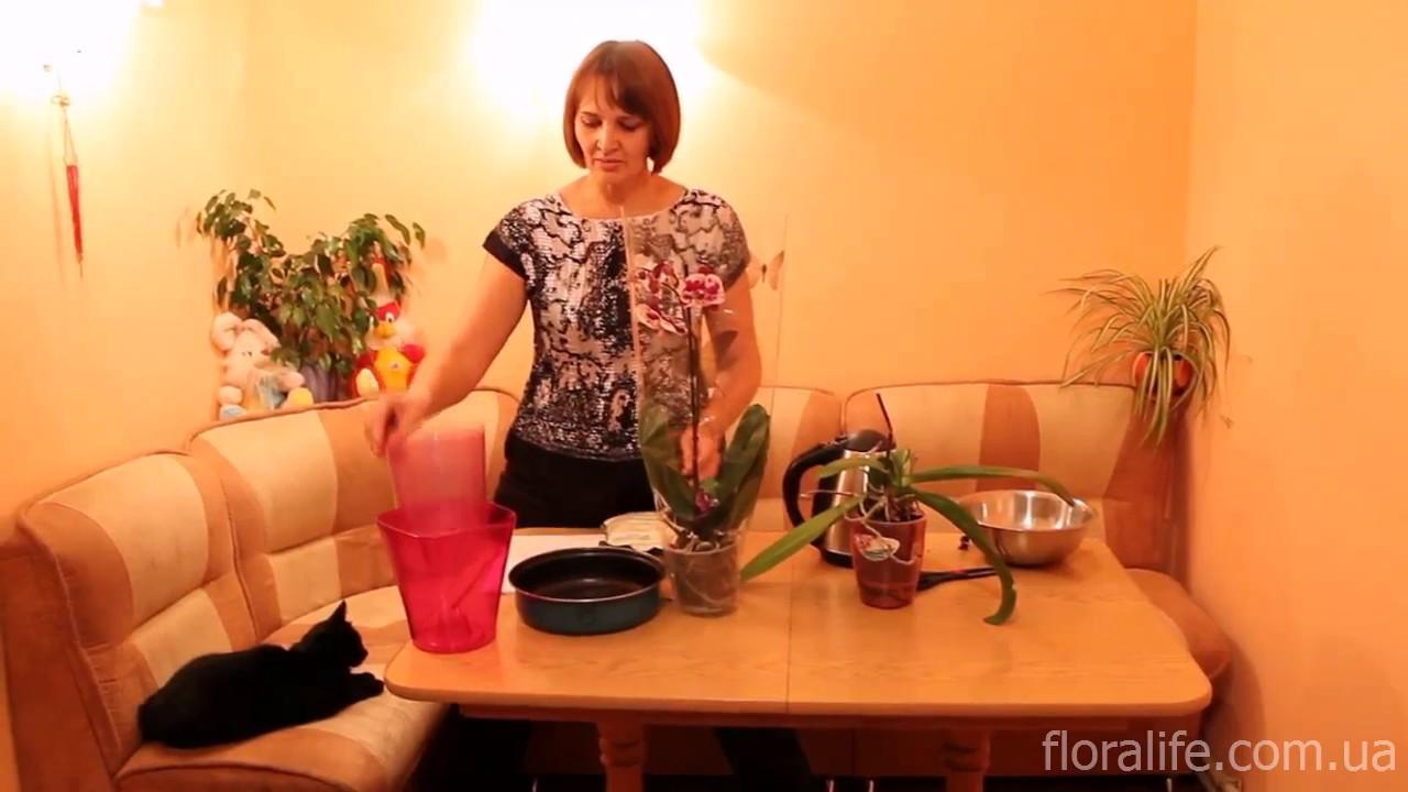 Пересадка орхидей за 7 минут