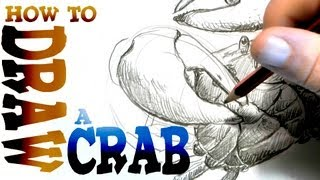 How to Draw Crabs (Advanced)