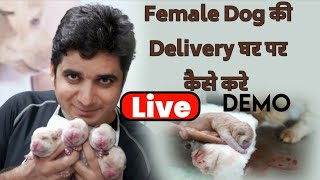 LIVE DEMO : How To Do Female Dog Delivery At Home Easily | Part1 | Dog Delivery At Home |  Whelping