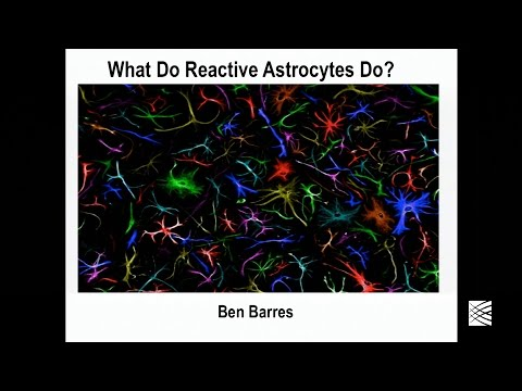 Ben Barres: What do reactive astrocytes do?