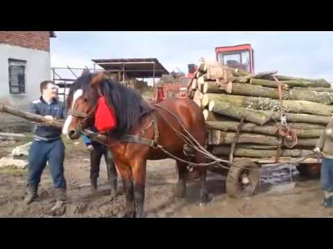 Очень сильная лошадь Тяжеловоз Very strong horse
